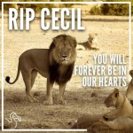 Within the Dark Cloud of Cecil's Murder Shines a Poignant Ray of Hope