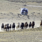 Wild Horses: Please Comment on BLM's Proposed Destruction of Red Desert Wild Horses