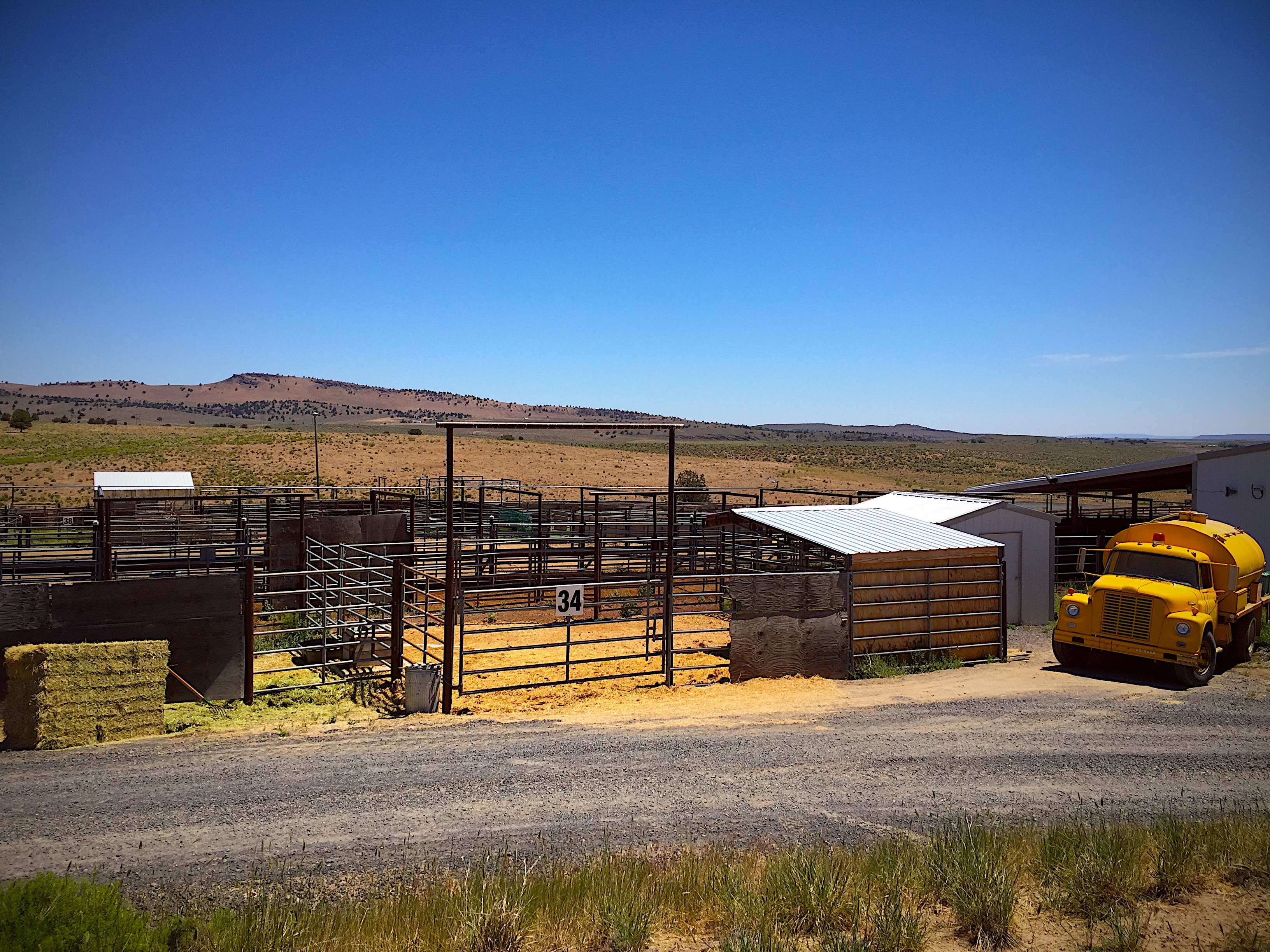 Home of BLM sterilization experiment lab at Hines, OR holding facility – photo by R.T. Fitch of Wild Horse Freedom Federation