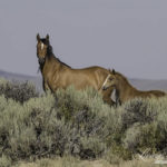 Please Comment on the BLM's Plan to Decimate the Checkerboard Lands in Wyoming