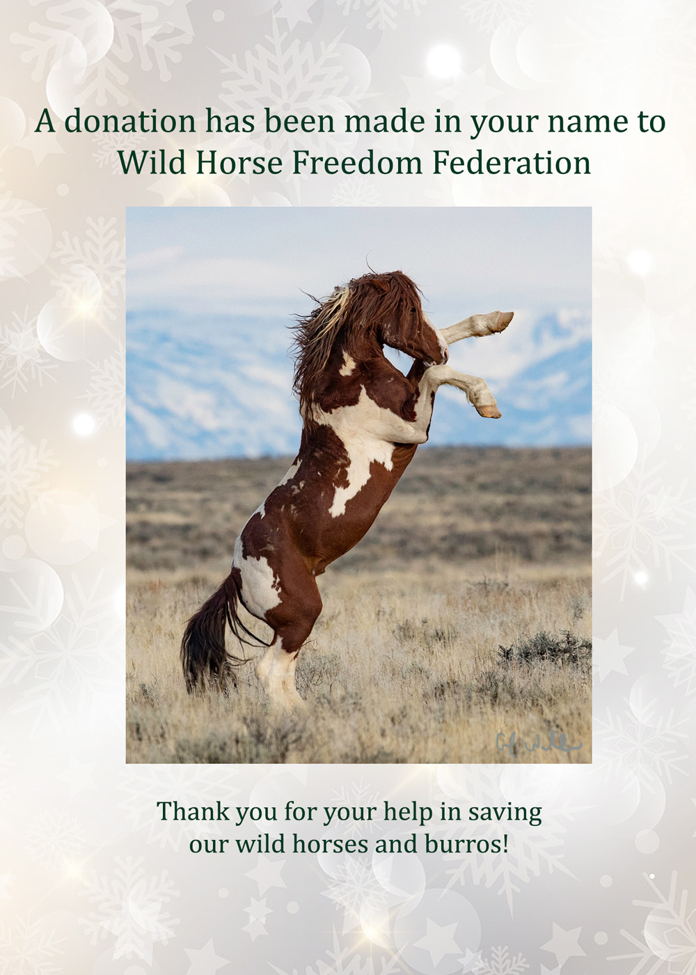 Give To Wild Horse Freedom Federation On Giving Tuesday And Receive The Gift Of Wild Horses Wild Horse Freedom Federation