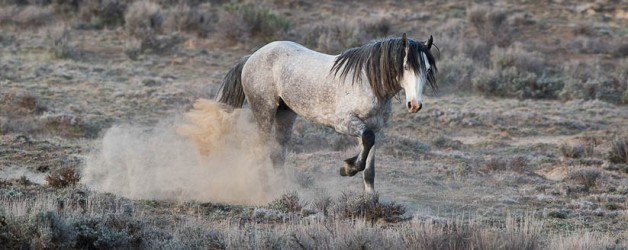 Wild Horses: Returning to Adobe Town after the Checkerboard Roundup