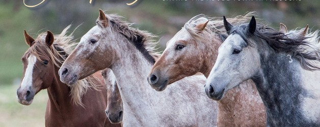 In the Name of Freedom – Wild Horses